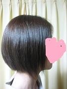 my shorthair1