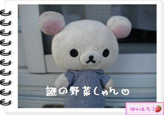 ちこちゃんの観察日記2012★12★謎の野菜5-1