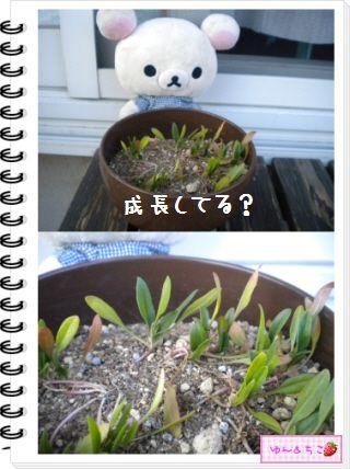 ちこちゃんの観察日記2012★12★謎の野菜5-2