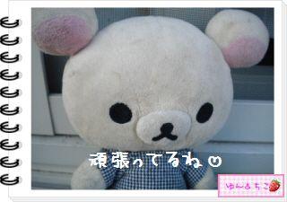 ちこちゃんの観察日記2012★12★謎の野菜5-7