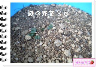 ちこちゃんの観察日記2012★12★謎の野菜5-8