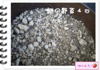 ちこちゃんの観察日記2012★12★謎の野菜5-9