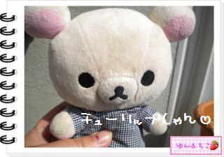 ちこちゃんの観察日記2012★13★チューリップの観察7-1