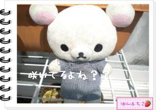 ちこちゃんの観察日記2012★14★チューリップの観察8-4