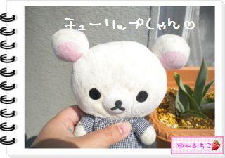ちこちゃんの観察日記2012★15★チューリップの観察9-1