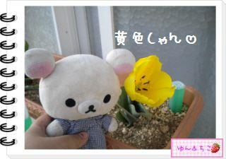 ちこちゃんの観察日記2012★15★チューリップの観察9-4