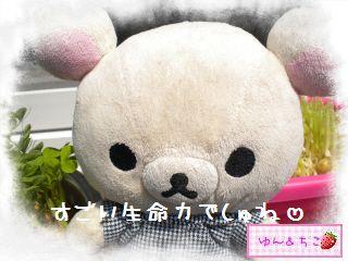 ちこちゃん日記★122★すごいでしゅ~-5