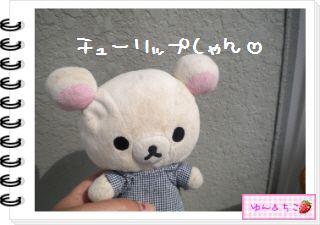 ちこちゃんの観察日記2012★16★チューリップの観察10-1