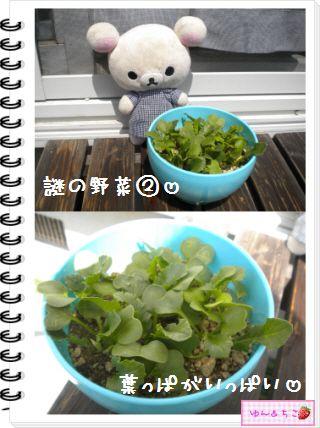 ちこちゃんの観察日記2012★17★謎の野菜6-3