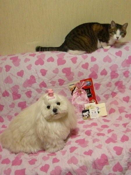 ~M & P + y ☆Happy Diary~-麻央&ポーラ