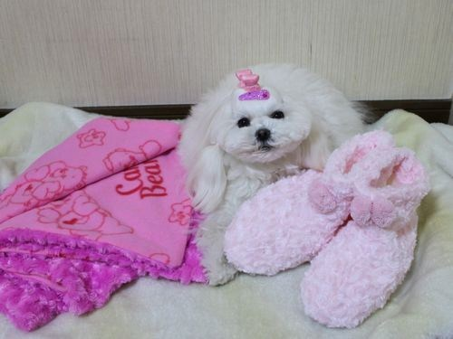 ~M & P + y ☆ Happy Diary ~