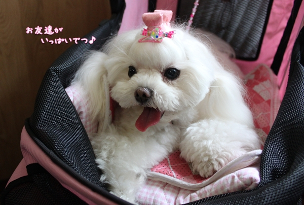 ~ M&P+y ☆ Happy Diary ~