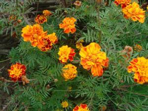 美しい花がたくさん