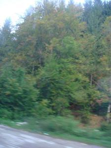 バスからの眺め~森