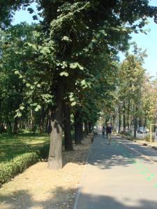 キセレフ通りをひたすらまっすぐ