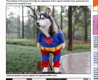 supermandog.jpg