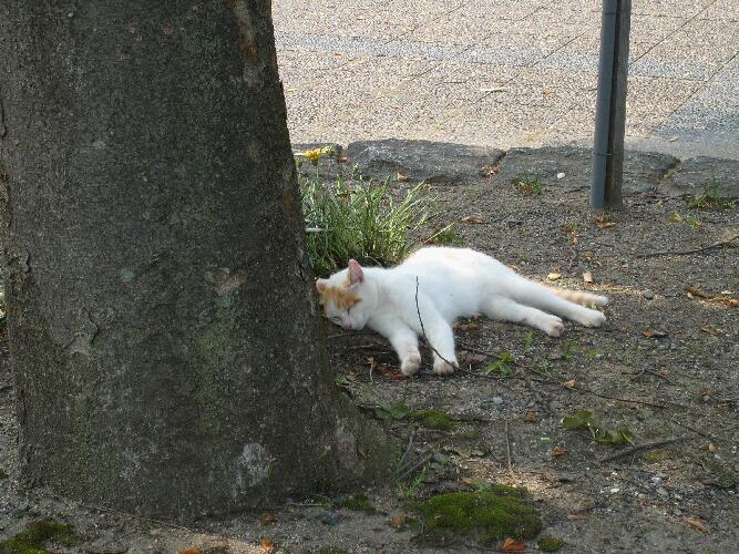 IMG_9778猫