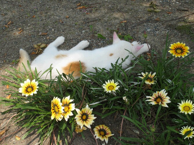 IMG_9772猫