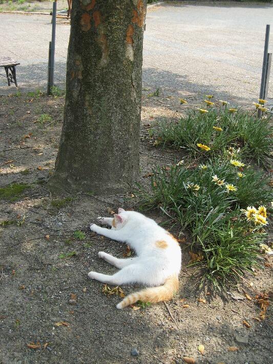 IMG_9773猫