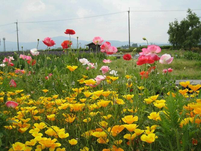 IMG_9743花