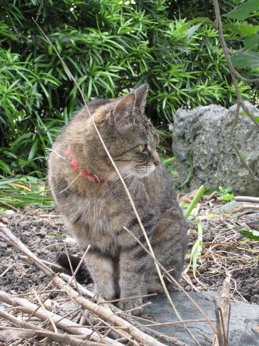 IMG_0140猫ドン