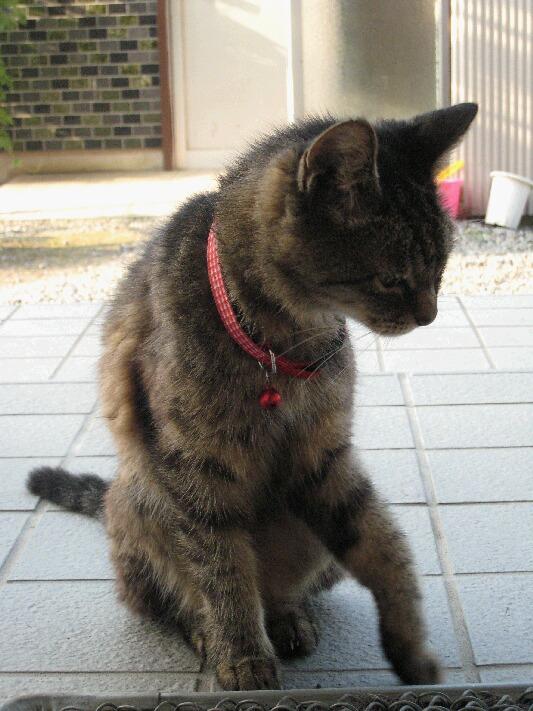 IMG_1730猫