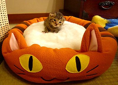 猫ベッド1