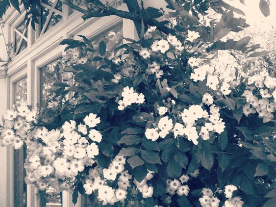 yurudeji_花園