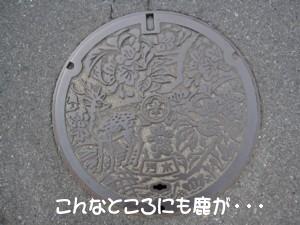 11・9奈良 003