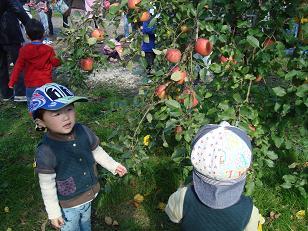 りんご二人
