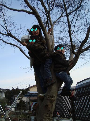 3人木に登る
