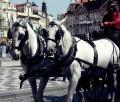 プラハ観光にて