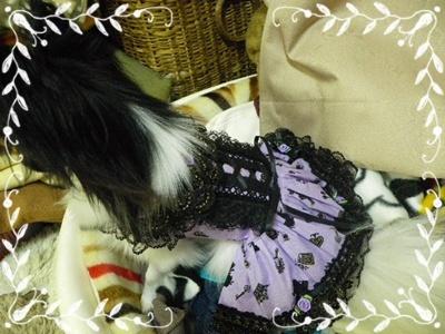 レネ洋服1