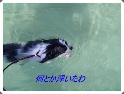 レネ水泳2