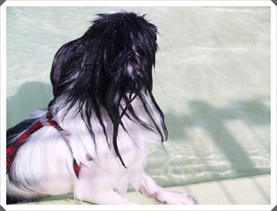 レネ水泳3