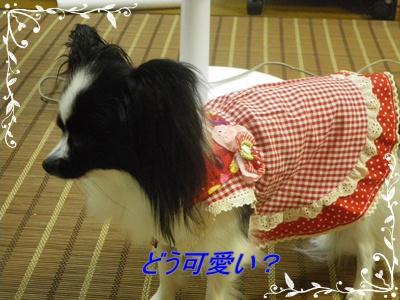 レネ洋服2
