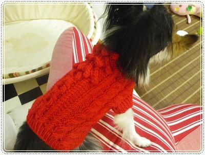 レネ赤セーター1