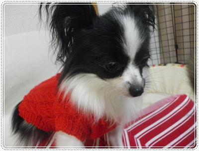 レネ赤セーター2