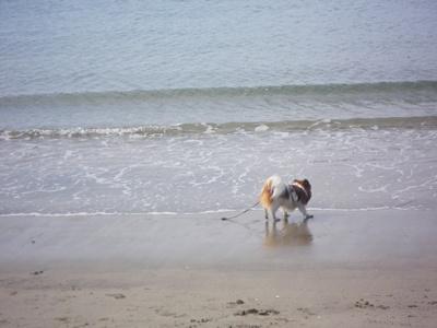 海で遊ぶムースくん
