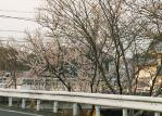 富雄川畔の花