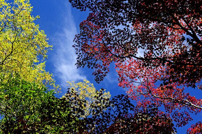 251114植物園秋景08b