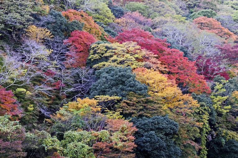 251121嵐山13