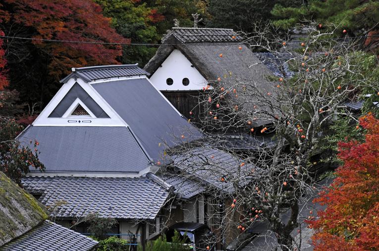 251121嵐山16