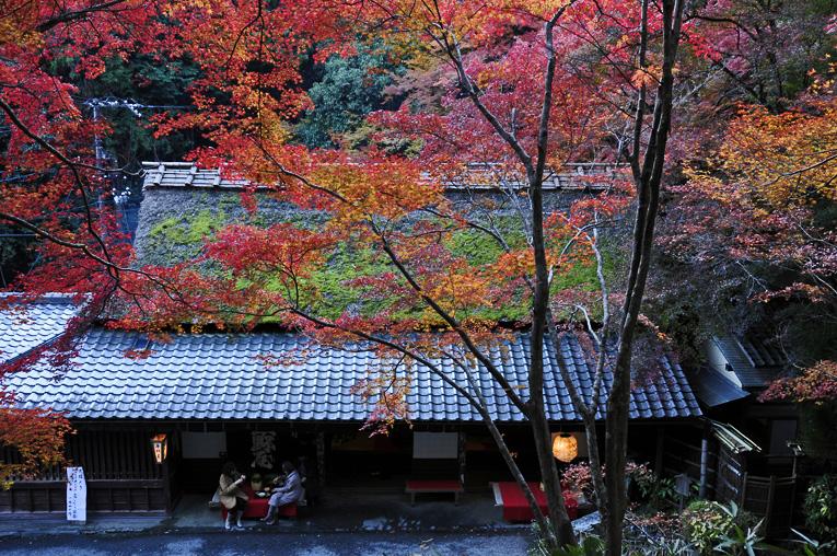 251121嵐山18