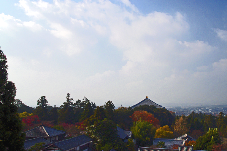 251205奈良公園17