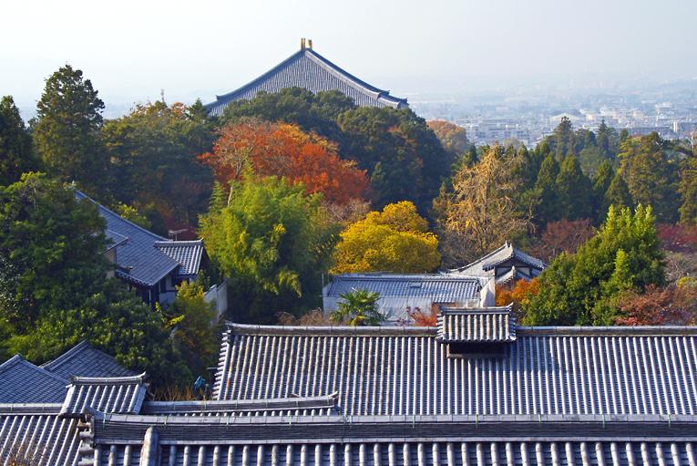251205奈良公園16