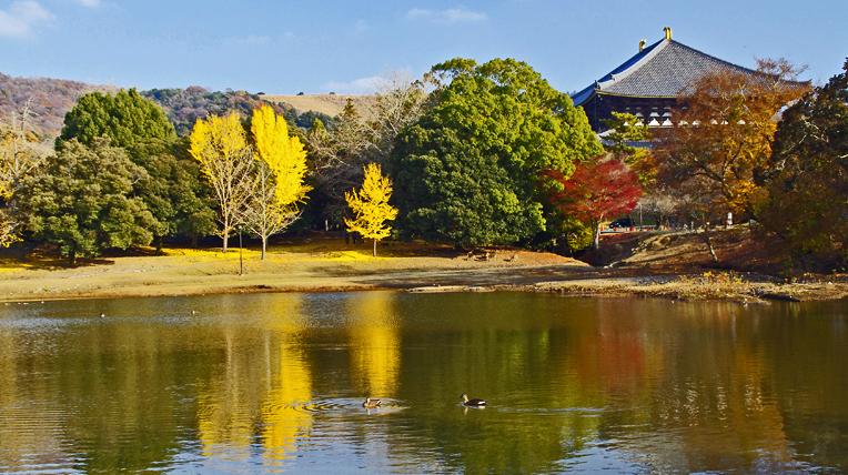 251205奈良公園33_edited-1