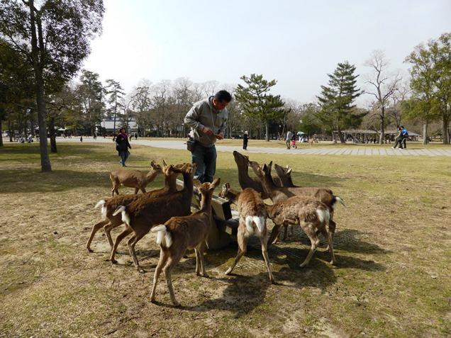 奈良2013・3 (9)