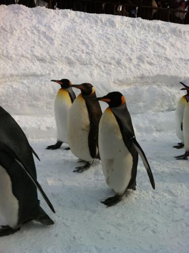 11.02.12 ペンギン