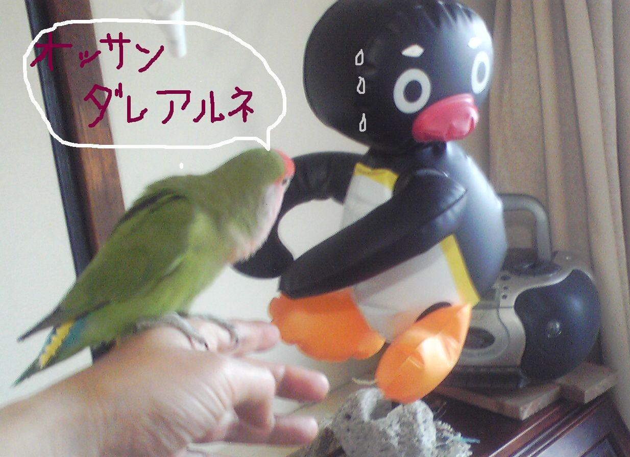 pinguナメラレ1